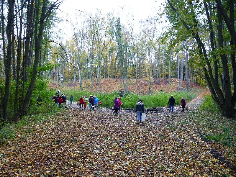Nach einem sehr stürmischen Vortag, der viele kleine Zweige und Blätter von den Bäumen fegte und die Suche nach den kleinen Woldkobolden zusätzlich erschwerte ging es trotzdem mit großen Erwartungen und voller Begeisterung in den nahen Wald.