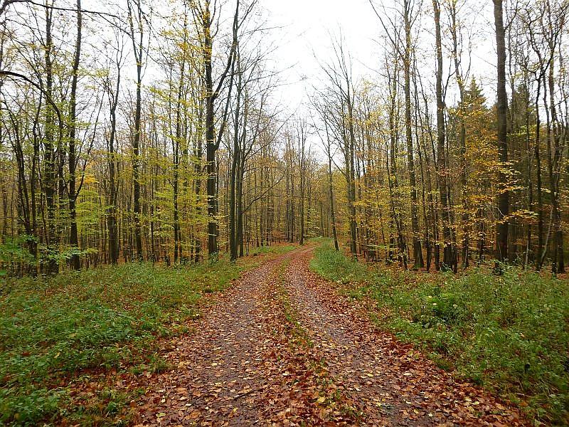 Durch den spätherbslichen Schlemminer Forst führte unsere heutige Vereins- und Kartierungsexkursion. Etwa 100, teils jahreszeittypische Großpilzarten konnten wir hier heute feststellen.