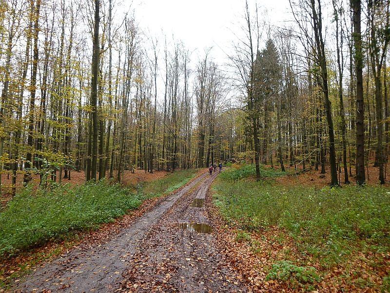 Und weiter führt und der Weg durch den spätherbstlichen Wald. Das Wetter war bestens. Mild und angenehm, allerdings vom vielen Regen der letzten Zeit auch sehr feucht und matschig.