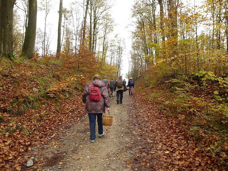 Das stark eiszeitlich geprägte, hügelige Landscvvhaftsprofil des Schleminer Forstes macht und Flachländern mitunter ganz schön zu schaffen. Wir befinden uns hier im Gebiet der Hohen Burg, einer der höchsten Punkt Mecklenburgs und in diesem Gebiet liegt auch der seit 1936 unter Naturschutz gestellte Schwarze See. Er ist der höchsgelegene See Mecklenburg - Vorpommerns. Selbst bei scharfen, winterlichen Grenzwetterlagen, wenn es im Umland noch regnet, kann es hier oben schon weiß werden.