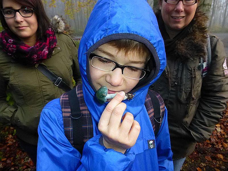 Der Geruch ist bei der Bestimmung mitunter sehr wichtig. Dieser riecht nur leicht und schwer beschreibbar, der Geschmack der Grünspan - Träuschlinge soll aber grasartig sein!