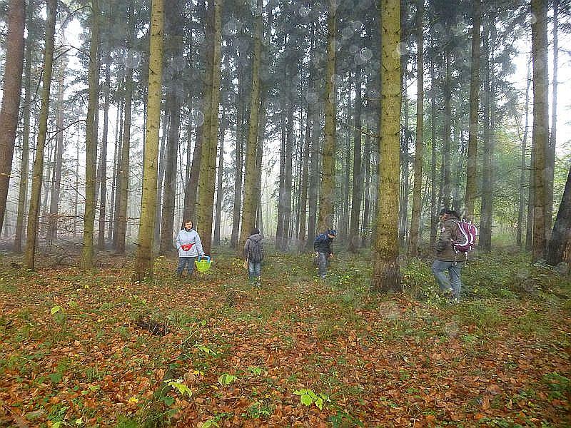Am 08. November 2013 ludt Irena mich zu einer Pilzwanderung mit dem Schulförderverein Fit For Life e.V. aus Schwerin zu einer Pilzwanderung durch den stadtnahen Friedrichstaler Forst ein.