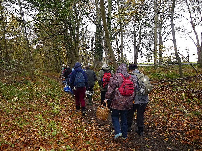 Nach einer kurzen Begrüßung ging es dann los. Da uns ein starker Wind an der Westkannte des Waldes um die Ohren bließ, waren wir froh als der erste Weg ins Waldesinnere auftauchte.