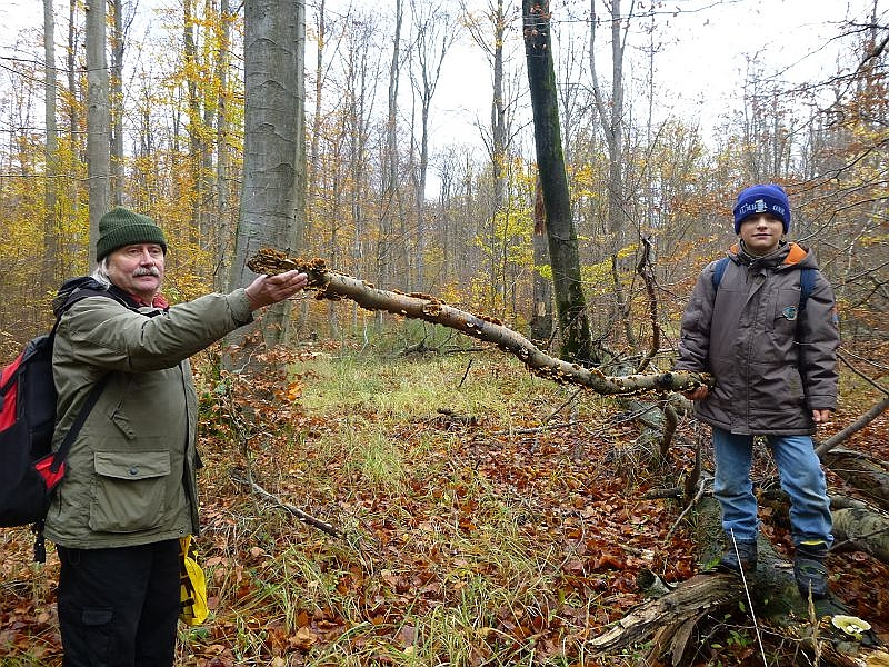 So auch dieser Buchen - Knüppel, den uns hier Jonas und ein weiteren Teilnehmer der heutigen Wanderung präsentieren. Ich nahm ihn mit für unsere Winterausstellung.