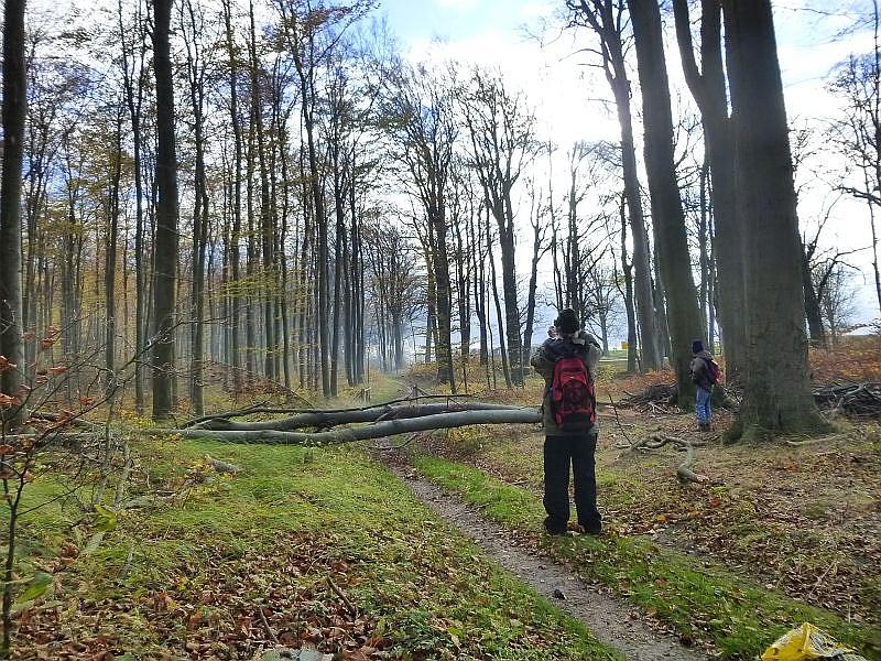 Und pläötzlich dampfte am Waldrand der Molli entlang. Eine altehrwürdige Schmalspurbahn die zwischen Bad Doberan und Kühlungsborn seit vielen Jahrzehnter verkehrt. Da hieß es Fotoaparrat raus, aber eher wir es geschafft hatten, blieb uns nur noch der Rauch der kleinen Dampflock zwischen den Bäumen übrig.