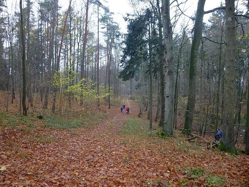 Der Baumbestand ist vielseitig und abwechslungsreich. Auch mit einem relativ hohen Anteil an Alt - und Totholz.