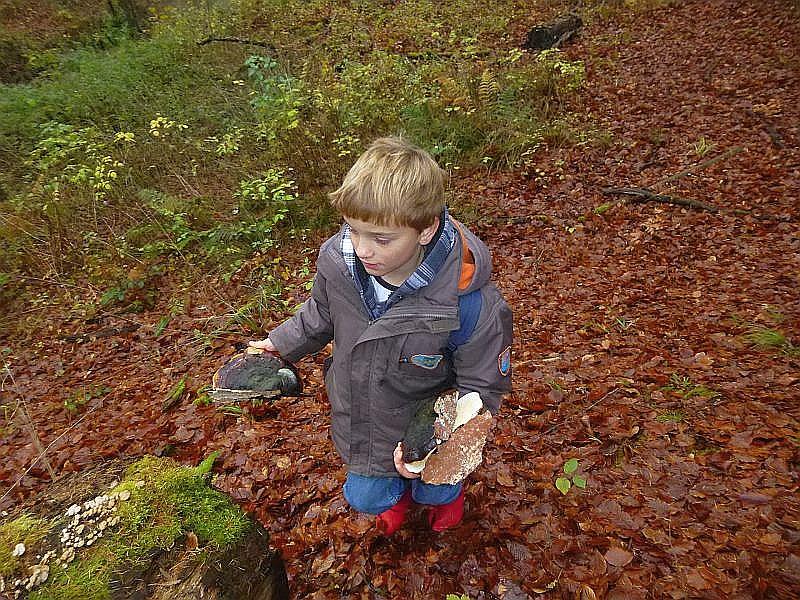 Während sich die meisten Teilnehmer nur für essbare Pilze und deren Doppelgänger interessieren, denkt Jonas an Mama und hat sehr schöne Rotrandige Baumschwämme für`s Adventsbasteln entdeckt und eingesammelt.