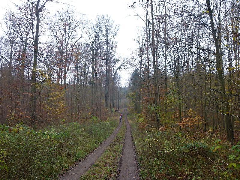 Unsere letzte Vereinsexkursion in diesem Jahr führte uns durch das Mustiner Holz. Ein vielseitiges Mischwaldgebiet mit steilen Hangterrassen zur Mildenitz hin.