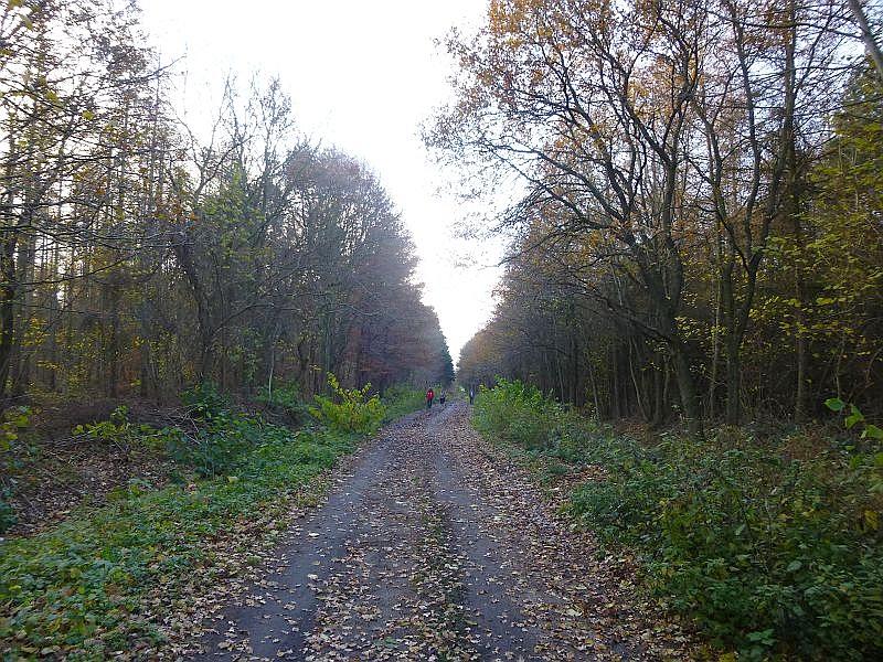Bei größtenteils sonnigem, windschwachen und relativ mildem Wetter wanderten wir heute zum Saisonabschluß durch die Wittenbecker Tannen bei Kühlungsborn.