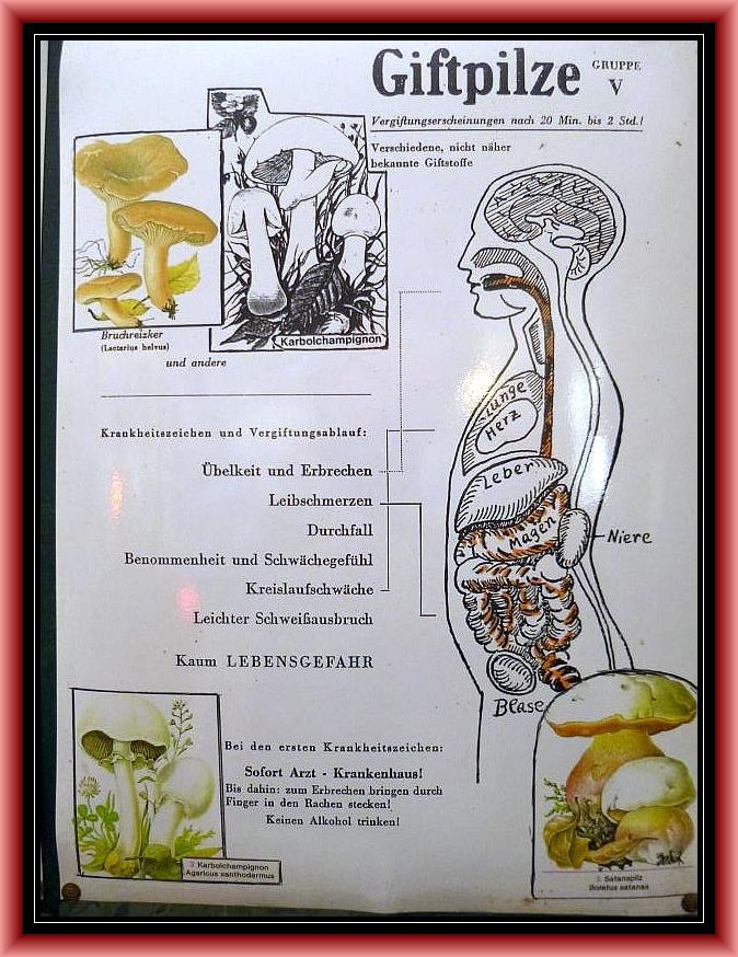 Gruppe 5: Gastrointestinale Pilzintoxikation. Magen/Darmgifte. Häufiger Vergiftungstyp mit tels heftigen Symtomen, aber bei gesunden Menschen ohne Lebensgefahr!