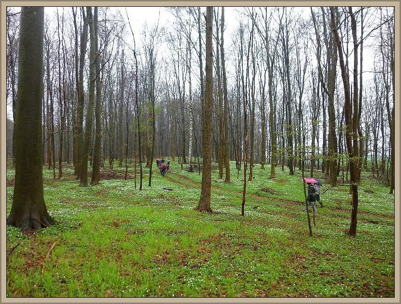 Nach dem wir noch einige Autos nach Kussow umgesetzt hatten, starteten wir durch diesen wunderschönen Anemonenwald zu unserer Lehrwanderung.