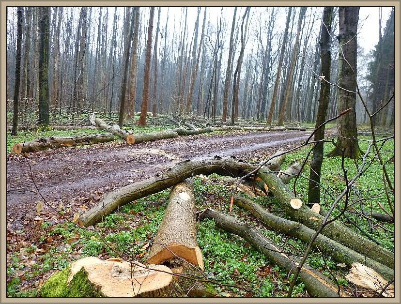 Wie in den meisten anderen Wäldern auch, wird hier intensiv Holz eingeschagen. Die Kättensegen lärmten auch heute hier in nicht allzugroßer Entfernung von diesem Ort krachten mächtige Waldbäume auf den Boden. Die Erntemaschienen dürfen einfach nicht still stehen. Aber nicht nur das die Forstleute heute Lärmten, vom nahegelegen Schießstand krachte es nahezu unendwegt. Von stiller Waldesruhe heute leider keine Spur!