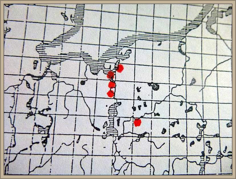 Amanita strobiliformis (Paulet ex Vitt.) Bertillon - Fransiger Wulstling
