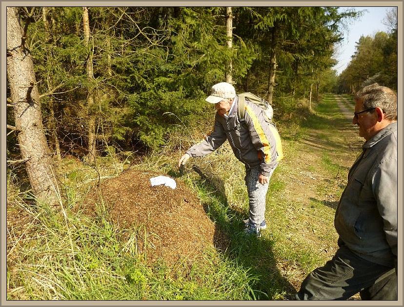 Selten kommt unsere Pilzfreundin Helga Köster an einem Ameisenhaufen vorbei, ohne ihr Taschentuch von Ameisensäre trenken zu lassen. Es hält danach die Nase besonders frei.