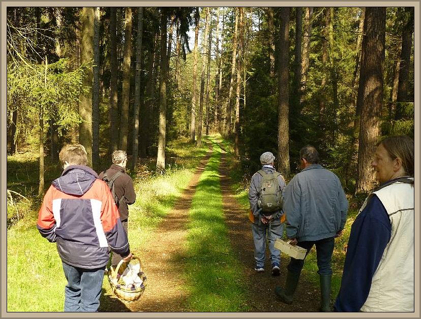 Inzwischen ist es richtig sonnig und warm geworden und wir nähern uns dem heutigen Höhepunkt unserer Wanderung, einer Begenung mit zahlreichen Frühjahrslorcheln, die im weiteren Verlauf diesen Waldweg säumten.