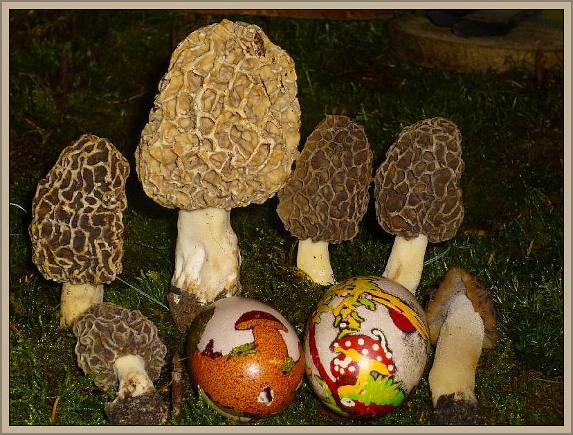 Allen Lesern unseres Tagebuches ein frohes und vieleicht auch pilziges Osterfest wünscht Reinhold Krakow vom Steinpilz - Wismar. Die Ostereier hat für uns liebevoll Anja Mondschein aus der Müritzregion bemahlt.