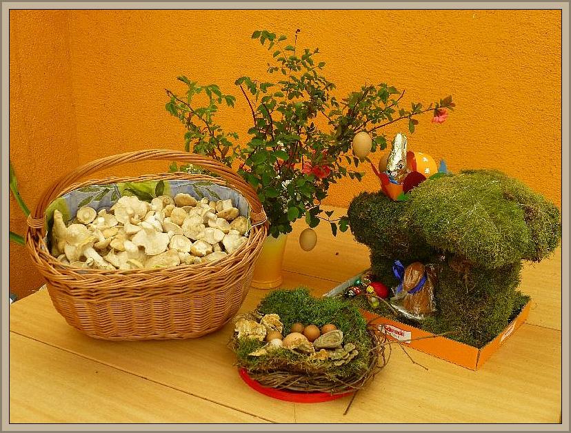 Der erste gefüllte Maipilzkorb am Ostersonntag, wann hat man das schon mal. Meist beginnt zu Ostern gerade mal die Lorchelzeit