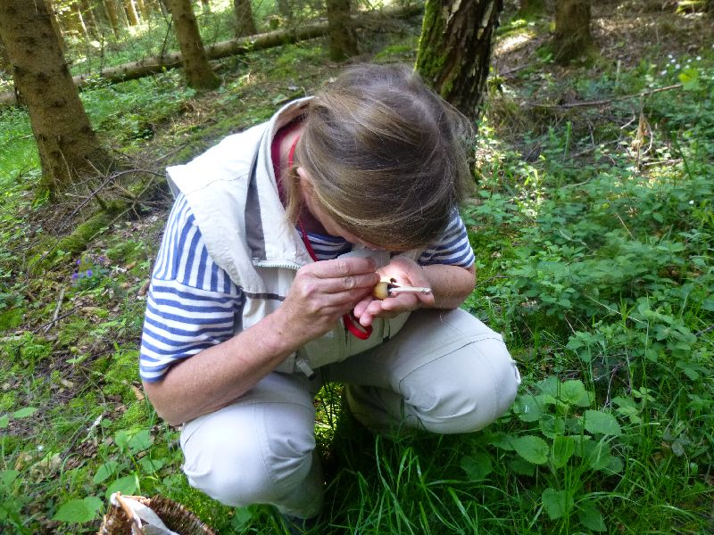 Um gewisse Feinheiten am Pilz zu erkennen ist eine Lupe sehr hilfreich.
