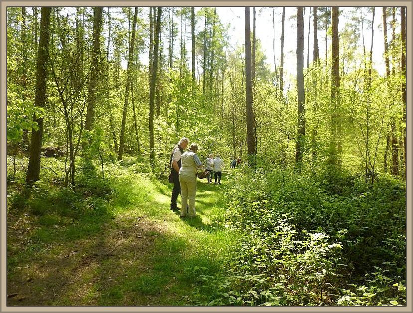 Es kommt wirklich nicht alle Jahre vor, dass bereits im April die Laubwälder so üppig mit frischem Grün ausgestattet sind!