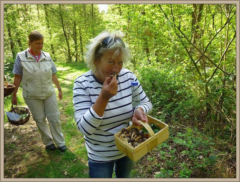 Unsere neue Vereins- und Pilzfreundin aus Schwerin traut den Frieden noch nicht so recht. Nie wäre sie auf die Idee gekommen, diese giftig aussehenden Schwefelköpfe in ihren Speisepilzkorb zu legen, aber man lernt bekanntlich nie aus.