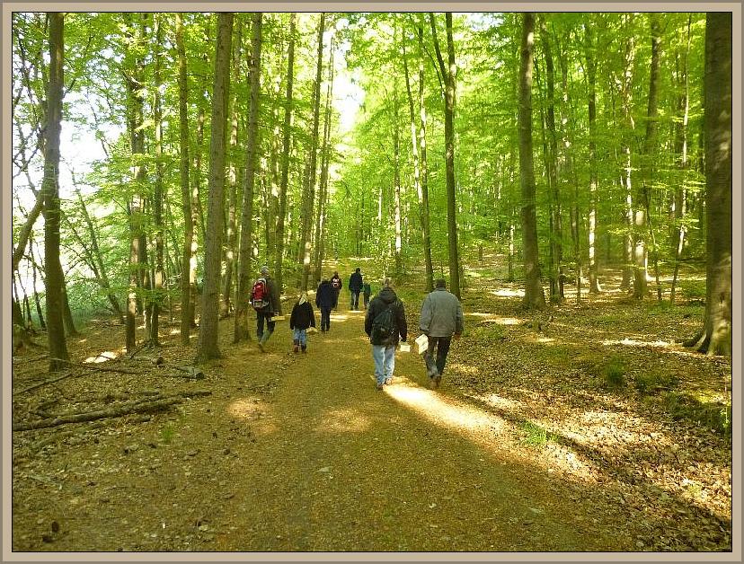 Kurz nach 09.00 Uhr starteten wir durch die schon voll belaubten Rotbuchenwälder vom Ruheforst aus.