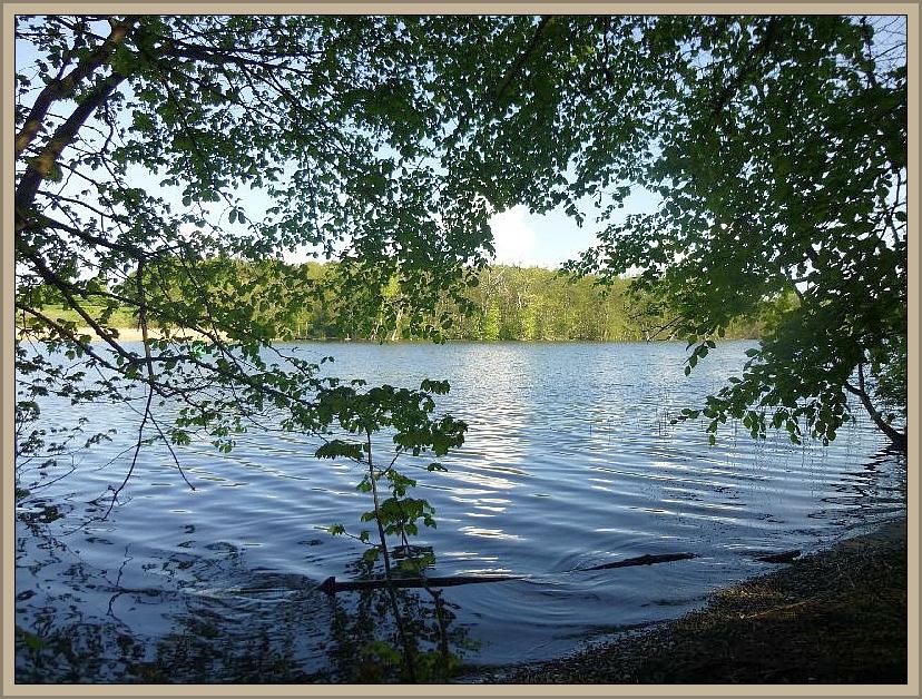 Der Schweriner See ist einer der größten Binnenseen Deutschlands. Durch den von Schelfwerder ausgehenden, künstlich aufgeschütteten Paulsdamm, über den die B 104 verläuft, wurde er einstamal in einen Außen- und einen Innensee getrennt. Wir befinden und hier in der Nähe des Paulsdamms und das Ufer des Sees ist über weite Strecken bewaldet.
