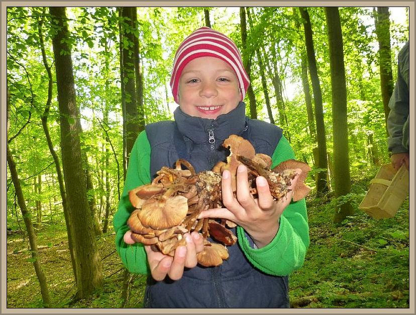 Und dann große Freude bei diesem jungen Pilzfreund. Er hat einen Stubben voller Stockschwämmchen entdeckt und das Abendbrot ist gesichert.