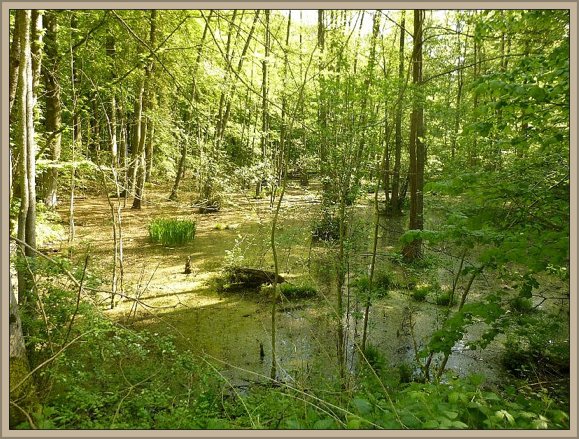 Zwischendurch immer wieder mal kleinere oder größere Feuchtbiotope. Einer von diesen Waldtümpel, Mooren, Sümpfen oder Seen ist auch unter der Bezeichnung Großmutters Loch bekannt.