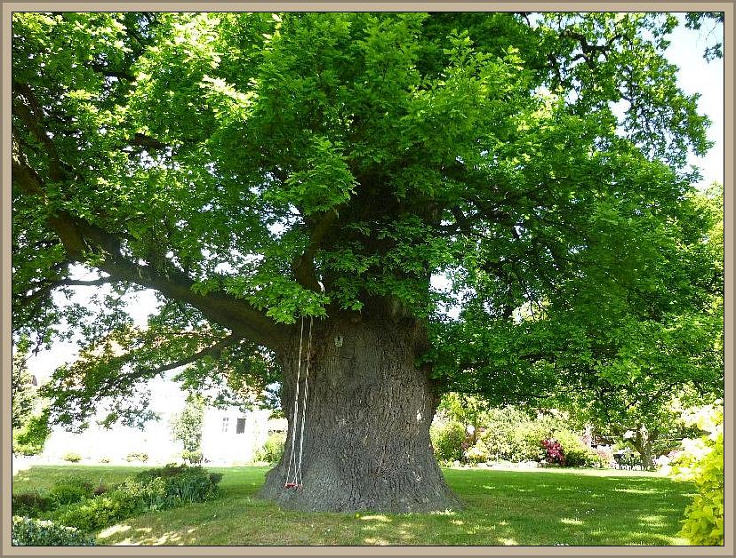 Mit fast unvorstellbaren 9m Stammumfang dürften wohl mindestens sechs Erwachsene Personen notwendig sein, um den Baum zu umarmen. Leider befand er sich auf einem eingezäunten Gelände und wir konnten es nicht ausprobieren.