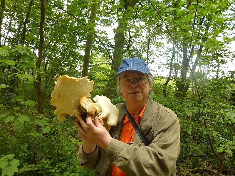 Und zum Schluß dann noch ein Stubben mit leider schon etwas alten Schuppigen Porlingen, gefunden von unserem dienstältesten Pilzfreund, Hans - Jürgen Wilsch, der mich hier mit seinen gefundenen Pilzen freundlicherweise fotografierte.