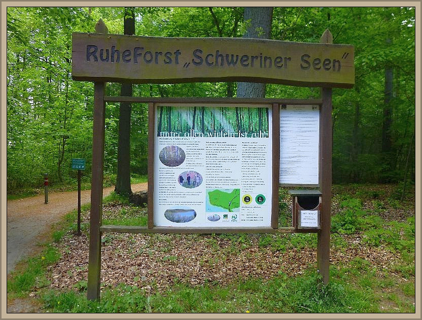 Gegen 09.00 Uhr starteten wir heute morgen am Eingang des Ruheforstes Schweriner See mit neun Erwachsenen und zwei Kindern zu einer Pilzlehrwanderung um die Halbinsel Schelwerder bei Schwerin.