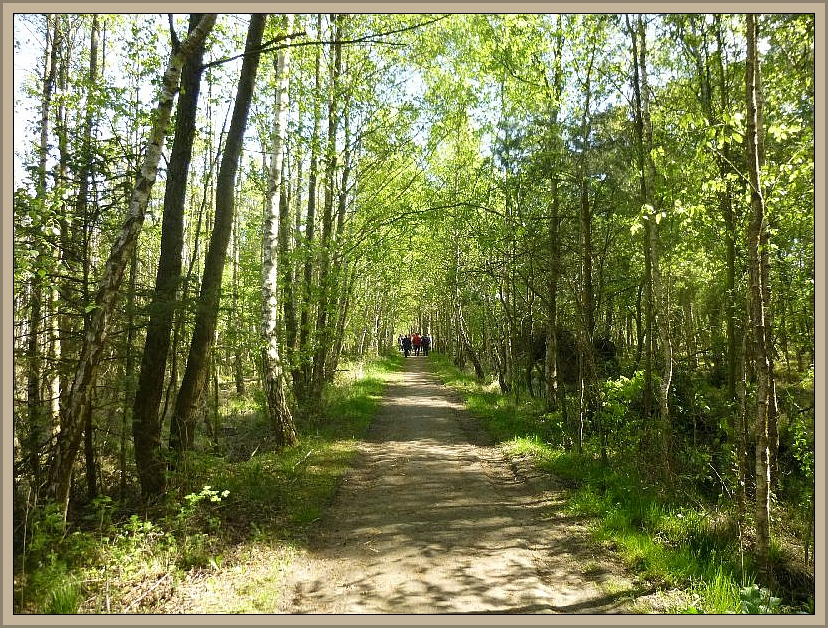 Dann ging es aber forschen Schrittes durch das Moor. Da es sich um ein Naturschutzgebiet handelt, sollten die Wege möglichst nicht verlassen werden, was hier auch kaum möglich ist ohne im Moor versinken zu drohen.