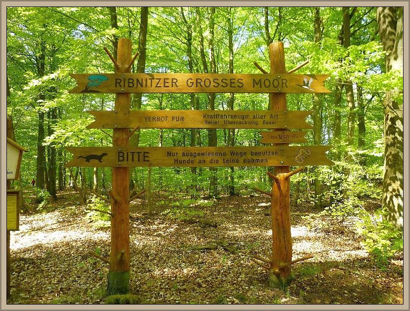 Zunächst ging es durch das Große Ribnitzer Moor, einem wertvollen und einzigartigen Naturschutzgebiet.