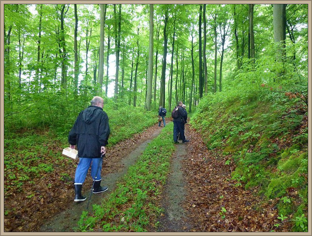 Nach den kräftigen Regenfällen duftete es förmlich schon nach frischen Pilzen in diesem herrlichen Buchenwald.