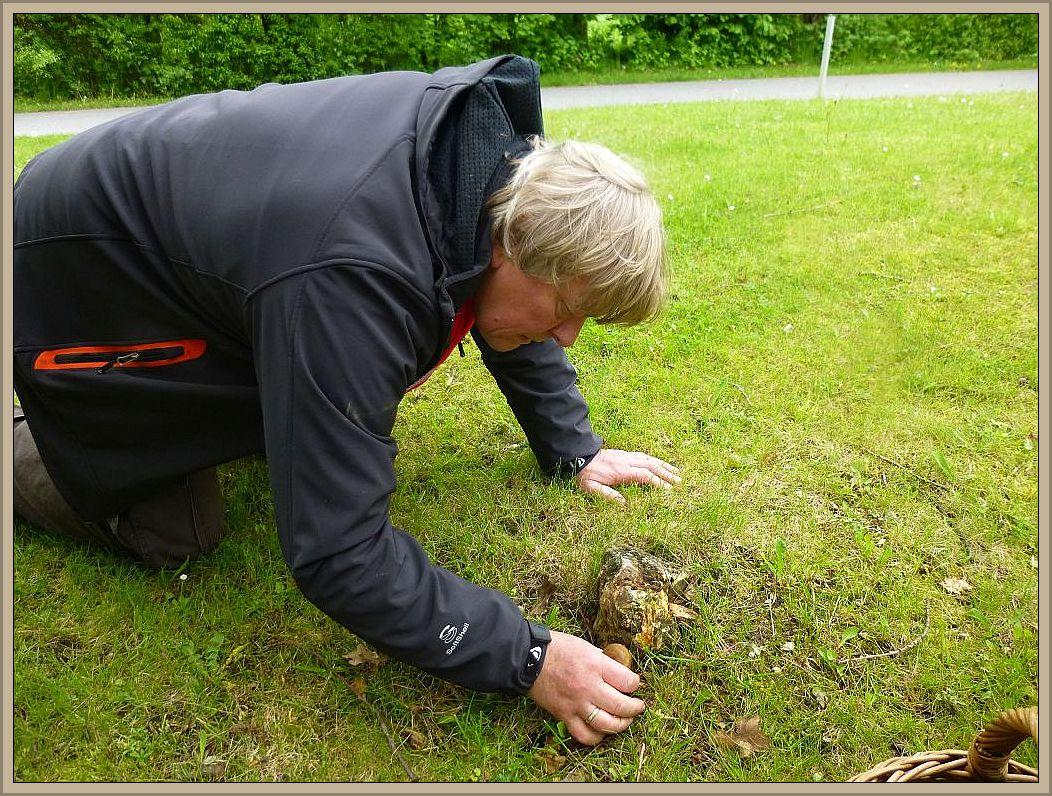 Egon aus Berlin hat an einem alten Stubben wieder etwas entdeckt.