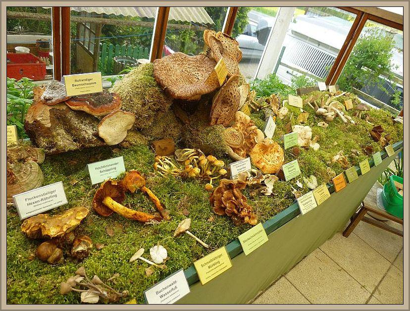 Zum Schluß bauten wir wieder von unseren ansehnlichsten Fundstücken eine kleine Ausstellung im Außenbereich auf.