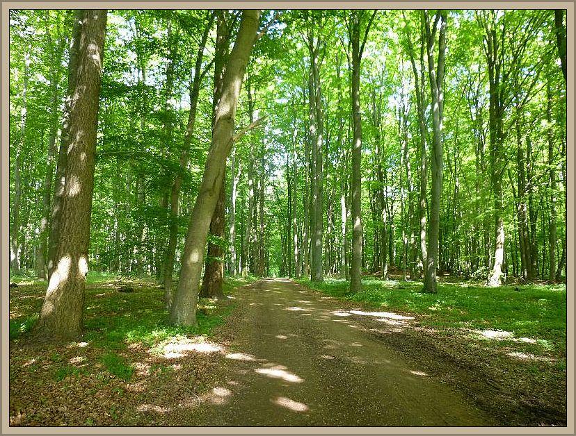 Laubwälder unterschiedlicher Struktur und einige Fichtenforste kennzeichnen den Wald bei Dragun. Die Böden sind teil kalkhatig und besonders im Sommer und Herbst könnten hier durchaus recht interessante Arten wachsen.