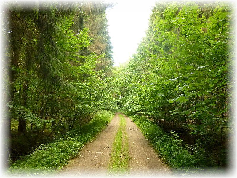 Ein ansich viel versprechendes Mischwaldgebiet, das Törber Holz, war heute Ziel unserer letzten Frühlingswanderung in diesem Jahr. Wie in vielen anderen Wäldern zur Zeit, herrschte hier heute absolute Flaute.
