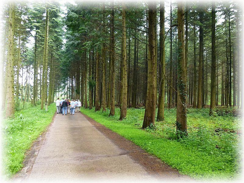 Danach führte uns dieser Waldweg direkt zum Forsthof Jantzen.