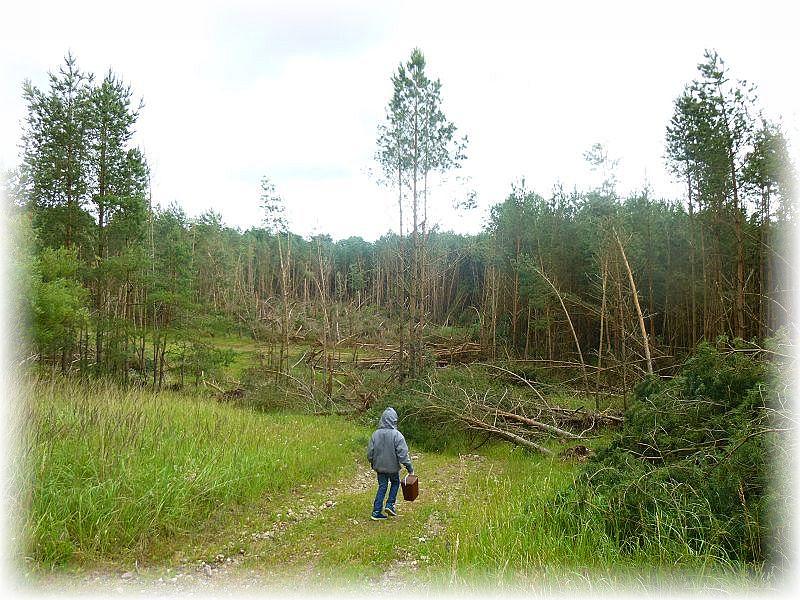 Heute im Kiefernforst bei Perniek. Jonas ist Geschockt. Was ist denn hier los Papa, die ganzen Bäume liegen kreuz uns quer durcheinander?.