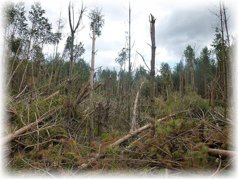 Von manchen Bäumen standen noch die Strünke, die Kronen abgedreh und die Stämme entästet. Ein Bild der totalen Verwüstung! Wehe dem, der während eines deratig giftigen Gewitters im Wald unterwegs ist. Bei Gewittern möglichst schnell aus dem Wald heraus!t