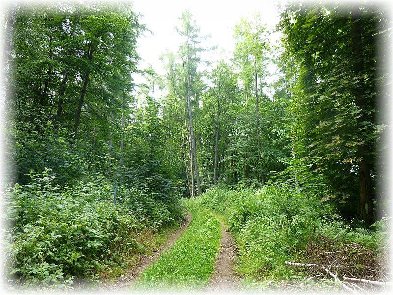 Ein Laubwaldgebiet zwischen Buchholz und Holdorf war heute Ziel einer Vereins- und Kartierungsexkursion.