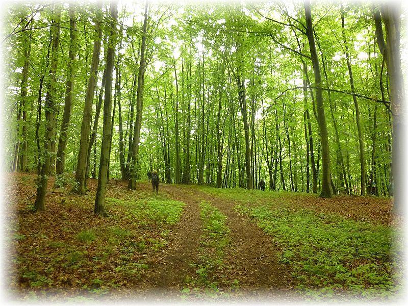 Dann ging es aber los durch den herrlich frischen Buchenwald. In der Nacht hatte es geregnet und die würzige Waldluft war eine Wohltat.