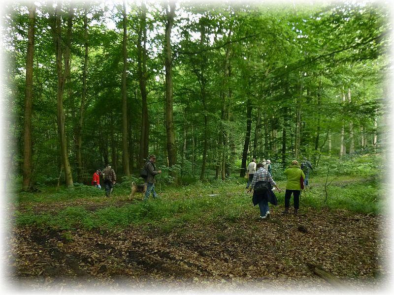 Dann ging es auf die kollektive Jagd, die heute leider kaum von Erfolg gekrönt war. Pilzsucher bezeichnet man auch als die vornehmen Jäger des Waldes, obwohl viele Wildbrettschützen eigentlich sich dafür halten. Darüber läßt sich ganz gewiß streiten!