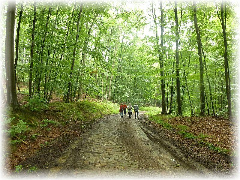 Nachdem sich alle in meine Teilnehmerliste eingetragen hatte und die fünf Euro Teilnahmegebühr entrichtet hatten, ging es los durch herrlichen Buchenwald..