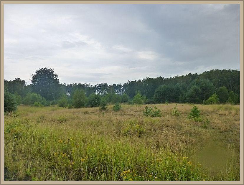 Das Gebiet wurde in früheren Zeiten als Standortübungsplatz genutzt und besticht durch teils heideartiges Gelände.