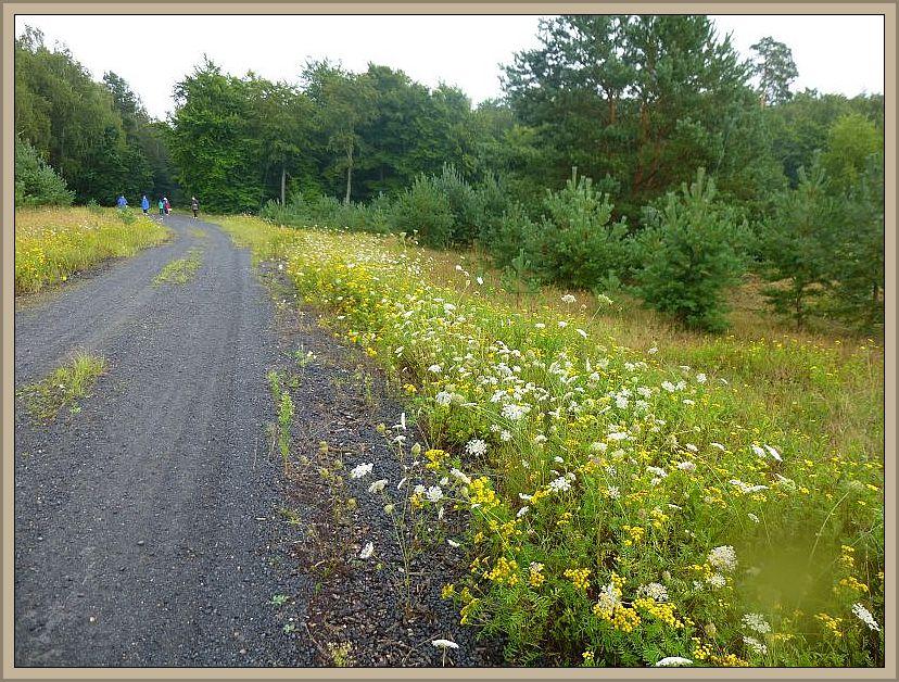 In diesem trockenen und sandigen Heidegebiet war der Regen ein Segen. Es grünt und blüht, als wäre hier der zweite Frühling ausgebrochen.