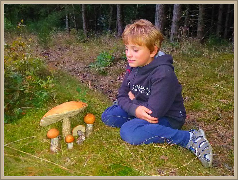 Jonas bewundert die schicken Heiderotkappen. Die größte von ihnen wog immerhin 800g und war noch richtig fest. Die Pilze landedeten kurzzeitig auf unserer Ausstellung und später auf dem Trockner. 27.08.2014.