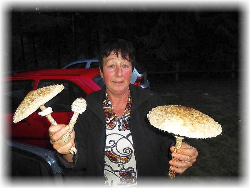 Schon bei der Anfahrt wurde unsere Pilzfreundin Angelika Boniakowski fündig. Wunderbare Riesen - Schirmpilze!