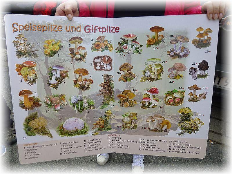 Um die wichtigsten Speise- und Giftpilze ging es auch auf der heutigen Individuellen Pilzwanderung im ehemaligen Staatsforst Turloss bei Jülchendorf.